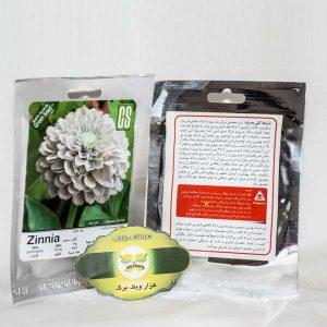 بذر گل آهار سفید