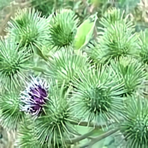خواص گیاه زردان در طب سنتی