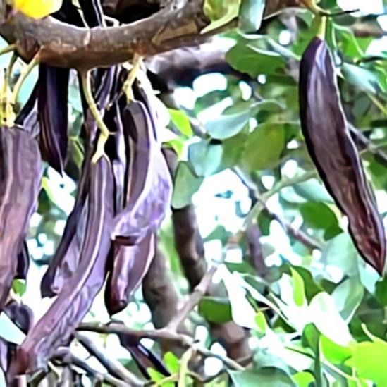 خواص گیاه فلوس در طب سنتی